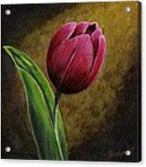 Single Tulip Acrylic Print by Jesslyn Fraser