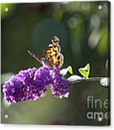 Sipping On Syrup Acrylic Print by Affini Woodley