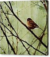 Sittin' In A Tree Acrylic Print by Rebecca Cozart
