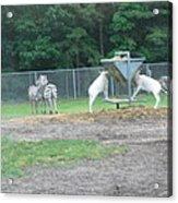 Six Flags Great Adventure - Animal Park - 121247 Acrylic Print by DC Photographer