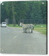 Six Flags Great Adventure - Animal Park - 121248 Acrylic Print by DC Photographer