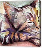 Sleeping Kitten Acrylic Print by Olga Shvartsur