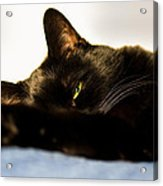 Sleeping With One Eye Open Acrylic Print by Bob Orsillo