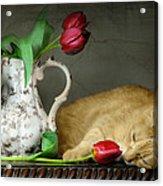 Sleepy Tulips Acrylic Print by Diana Angstadt