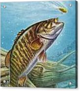 Smallmouth Bass Acrylic Print by JQ Licensing