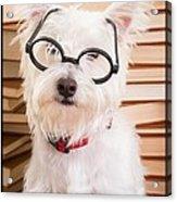 Smart Doggie Acrylic Print by Edward Fielding