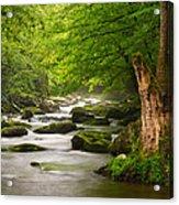 Smoky Mountains Solitude - Great Smoky Mountains National Park Acrylic Print by Dave Allen