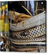Snakes In Snake-flavoured Alcohol Bottles  Acrylic Print by Sami Sarkis
