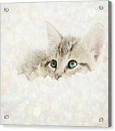 Snow Baby Acrylic Print by Amy Tyler