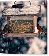 Snow Birds Acrylic Print by Bonnie Bruno