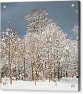 Snow Covered Trees In The Forest In Winter Acrylic Print by Matthias Hauser