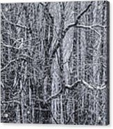 Snow In The Forest Acrylic Print by Diane Diederich
