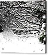 Snow Scene 5 Acrylic Print by Patrick J Murphy