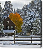 Snowed In At The Ranch Acrylic Print by Mitch Shindelbower