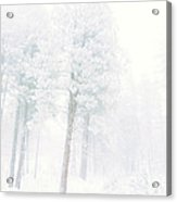 Snowed In Acrylic Print by Tara Turner