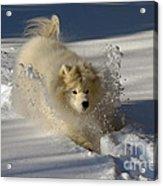 Snowplow Acrylic Print by Lois Bryan
