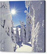 Snowscape Snow Covered Trees And Bright Sun Acrylic Print by Anonymous