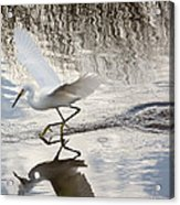 Snowy Egret Gliding Across The Water Acrylic Print by John Bailey