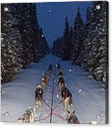Snowy Night In The Pines Acrylic Print by Karen  Ramstead