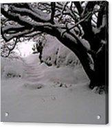 Snowy Path Acrylic Print by Amanda Moore