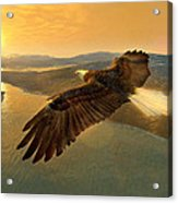 Soaring Eagle Acrylic Print by Ray Downing
