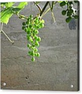 Solitary Grapes Acrylic Print by Deb Martin-Webster