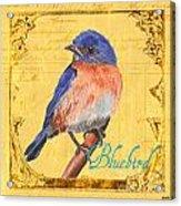 Colorful Songbirds 1 Acrylic Print by Debbie DeWitt