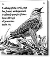 Songbird Drawing With Scripture Acrylic Print by Janet King