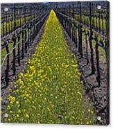 Sonoma Mustard Grass Acrylic Print by Garry Gay