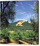 Sonoma Valley Vineyard Acrylic Print by Craig Lovell