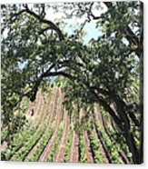 Sonoma Vineyards In The Sonoma California Wine Country 5d24619 Vertical Acrylic Print by Wingsdomain Art and Photography