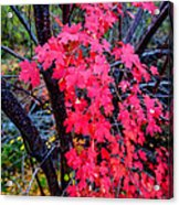 Southern Fall Acrylic Print by Chad Dutson