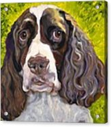 Spaniel The Eyes Have It Acrylic Print by Susan A Becker
