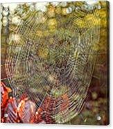 Spider Web Acrylic Print by Edward Fielding