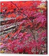 Splendid Fall Acrylic Print by Valia Bradshaw