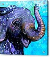 Splish Splash Acrylic Print by Debi Starr