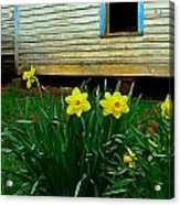 Spring At The Old Home Place Acrylic Print by Julie Dant