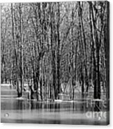 Spring Flooding Acrylic Print by Sophie Vigneault