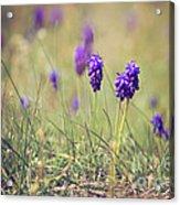 Spring Flowers Acrylic Print by Diana Kraleva