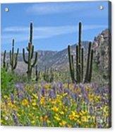 Spring Flowers In The Desert Acrylic Print by Elvira Butler