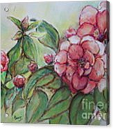 Spring Flowers Wet With Dew Drops Original Canadian Pastel Pencil Acrylic Print by Aeris Osborne
