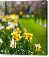 Spring In Holland. Garden Keukenhof Acrylic Print by Jenny Rainbow