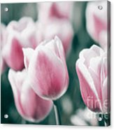 Spring In Love Acrylic Print by Angela Doelling AD DESIGN Photo and PhotoArt