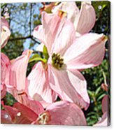Spring Pink Dogwood Floral Art Prints Flowers Acrylic Print by Baslee Troutman