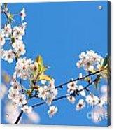 Spring Tree Acrylic Print by Michal Bednarek