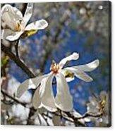 Spring Trees 1 Acrylic Print by Allan Morrison