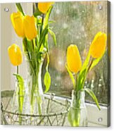 Spring Tulips Acrylic Print by Amanda And Christopher Elwell