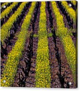 Spring Vinyards Acrylic Print by Garry Gay