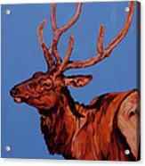 Stag Acrylic Print by Patricia A Griffin