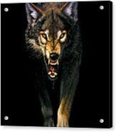 Stalking Wolf Acrylic Print by MGL Studio - Chris Hiett